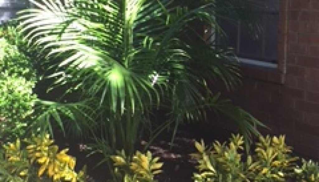 front-yard-trees